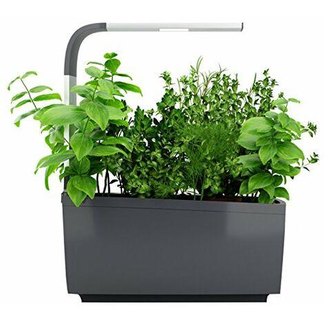 "main image of ""TREGREN, Gray T3 Kitchen Garden, 3 plantes"""