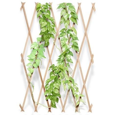 treillage solide en bois pour plante 45771. Black Bedroom Furniture Sets. Home Design Ideas