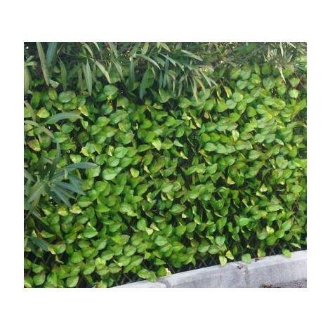 Treillis feuilles de rosier - hauteur 1 mètre