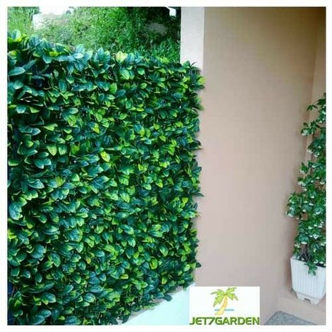 Treillis feuilles Troène doré - hauteur 1 mètre