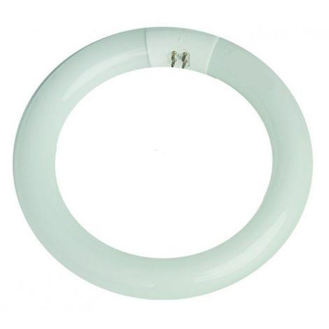 Tubo fluorescente circular económico G10 22W 6400°K 220mm. (ILOGO 22WT96400K)