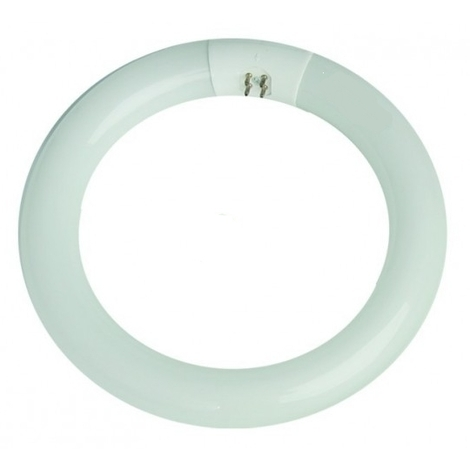 Tubo fluorescente circular económico G10 32W 6400°K 320mm. (ILOGO 32WT96400K)