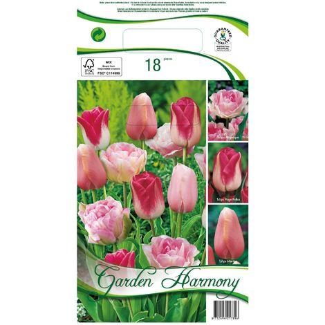 Tulipanes rosados (3 variedades)