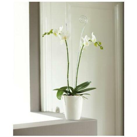 Tutor orquídea