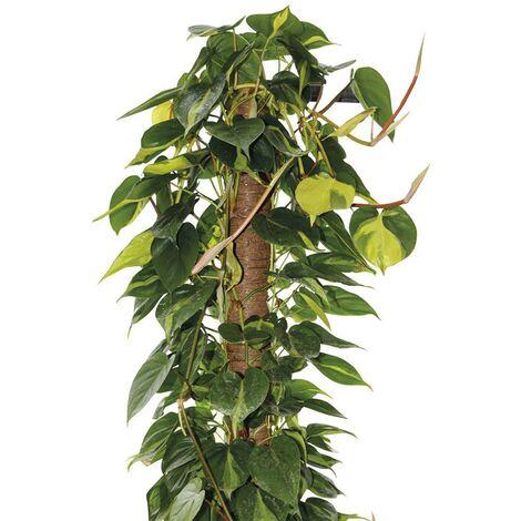 """main image of """"Tutore per piante rampicanti da interno bastone muschiato Ø 5 cm"""""""
