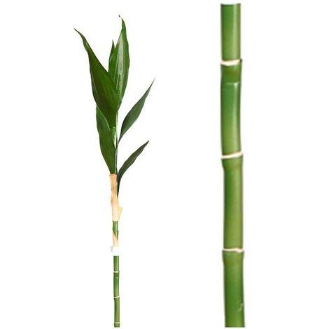 Vara Bambú Lucky Artificial. Realista de Tela. Altura 108 Cm.