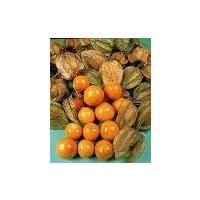 Vegetable - Cape Gooseberry - Physalis Edulis