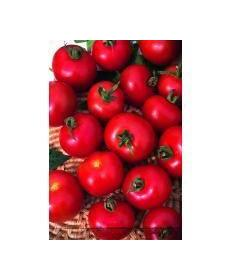 Kings Seeds Moneymaker Pictorial Packet Vegetable Tomato