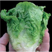 Vegetable - Lettuce - Little Gem