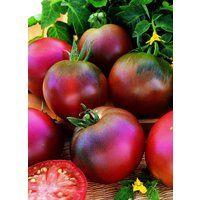 Vegetable - Tomato - Black Russian