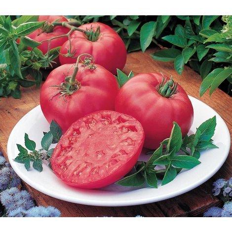 Vegetable - Tomato - Brandy Boy