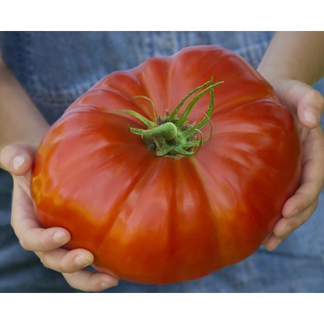 Vegetable - Tomato - Gigantomo