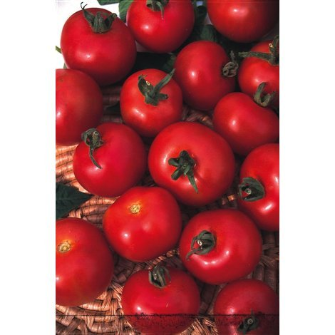 Vegetable - Tomato - Moneymaker
