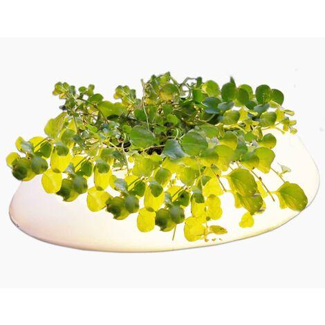 Velda Luz flotante de estanque 3 W blanca ovalada