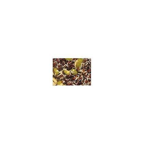 Versele Laga Canarios semillas para germinar 20 KG