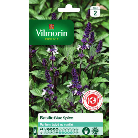 Vilmorin - Basilic Blue Spice