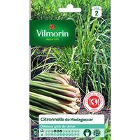 Vilmorin - Citronnelle de Madagascar