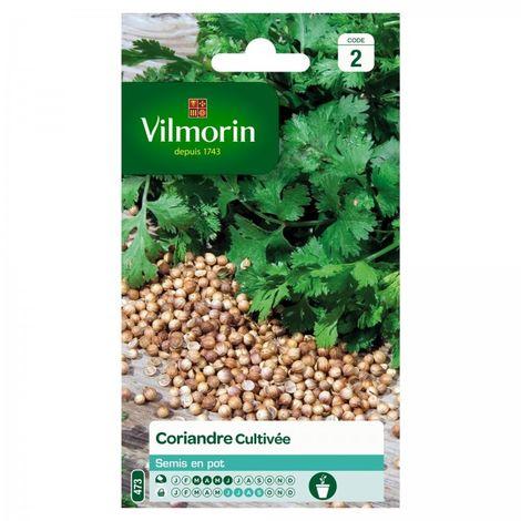 Vilmorin - Coriandre Cultivée
