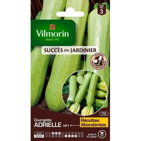 Vilmorin - Courgette Adrielle HF1 (Création Vilmorin) - SDJ