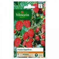 Vilmorin - Fraisier 4 Saisons Supreme