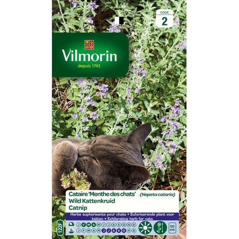 Vilmorin - Herbe A Chat Cataire