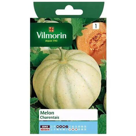 Vilmorin - Melon Charentais
