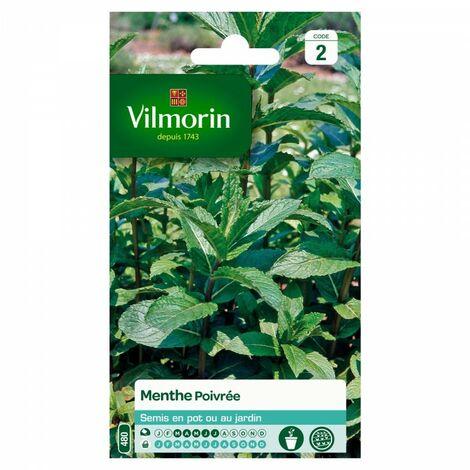 Vilmorin - Menthe Poivrée