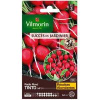 VILMORIN Sachet graines de Radis TINTO