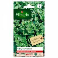 Vilmorin - Tetragone Cornue