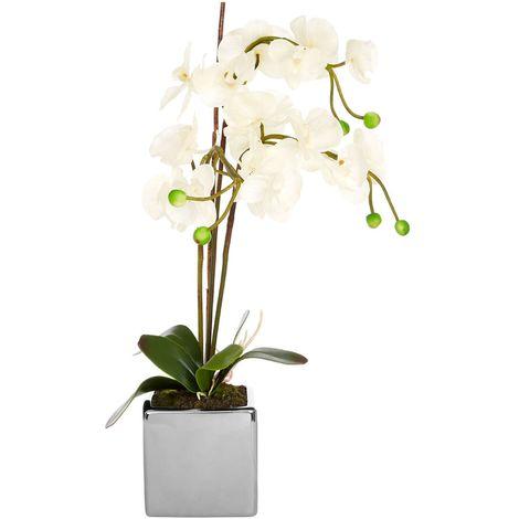White Orchid Plant, Silver Ceramic Pot, Fiori