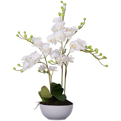 White Orchid Plant, White Ceramic Pot, Fiori
