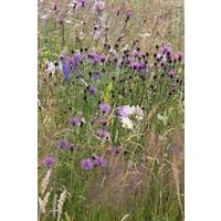 Wild Flower - Meadow Mixture - Bees and Butterflies