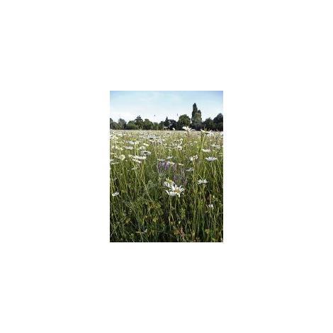 Wetlands Meadow Seed Mix Damp Areas 20g Wild Flower