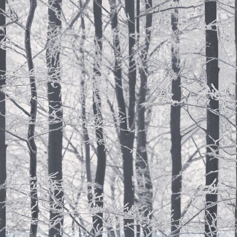 Woodland Wallpaper Trees Winter Forest Glitter Sparkle White Grey Black Silver