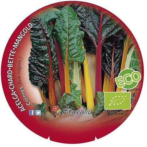 Zanahoria colores - Maceta de 10,5cm