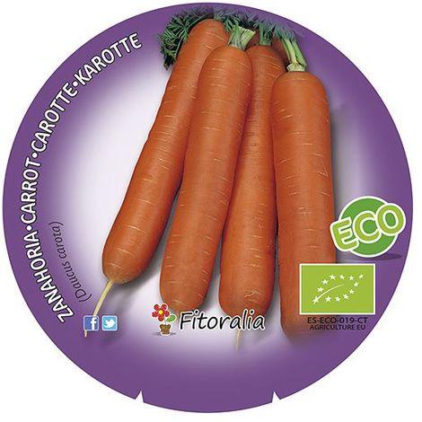 Siembra en línea zanahorias