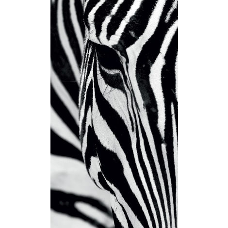 Zebra, rideau imprimé zoom sur un visage de zèbre 140x245 cm, 1 part