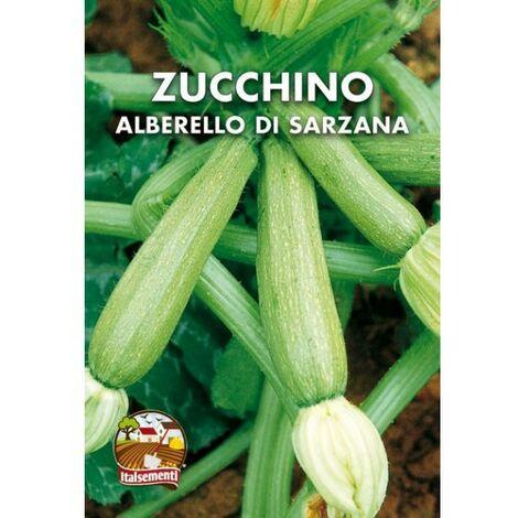 Zucchino alberello di Sarzana (Semente)