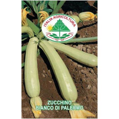 Zucchino bianco di Palermo (Semente)