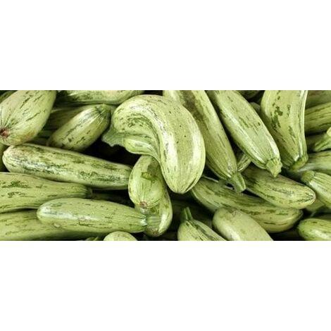 Zucchino chiaro