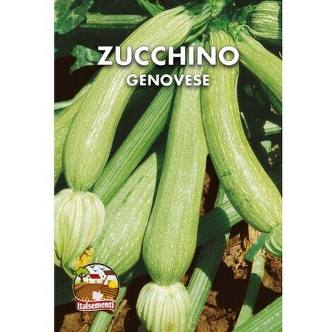 Zucchino genovese (Semente)
