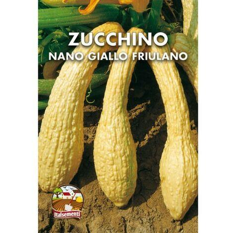 Zucchino giallo rugoso friulano (Semente)