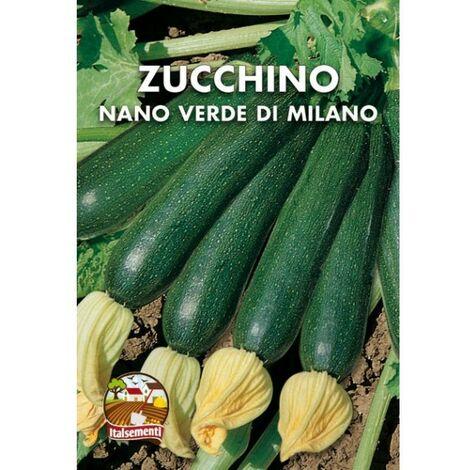 Zucchino nano verde di Milano (Semente)