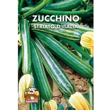 Zucchino striato d'Italia (Semente)