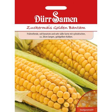 Zuckermais Golden Bantam